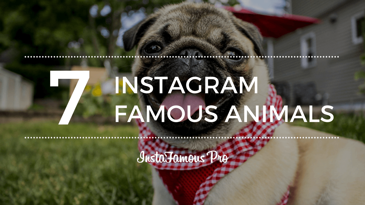 Instagram Famous Animals