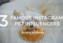 Famous Instagram Pet Influencers